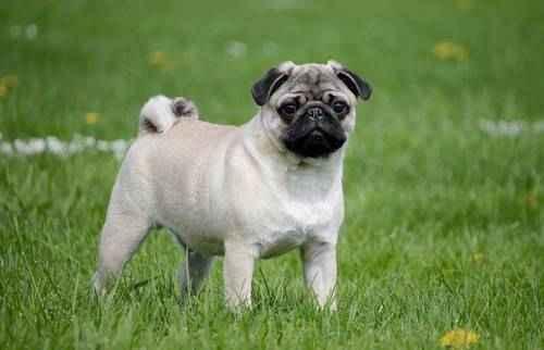 собаки небольших размеров