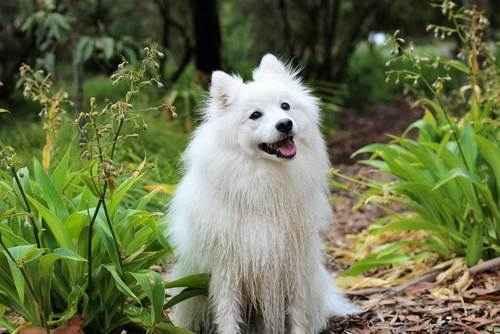 ТОП 15 пород собак с белой шерстью - названия, фото и краткое описание 15