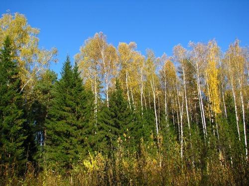 Лесное природное сообщество: особенности, значение для человека, флора и фауна 2