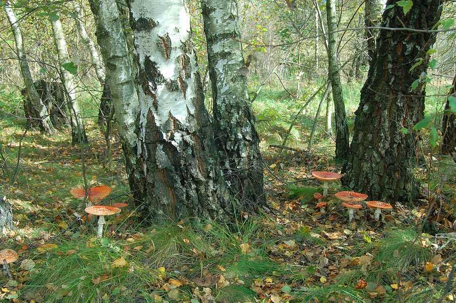 Какие леса преобладают на территории России: типы и характеристика