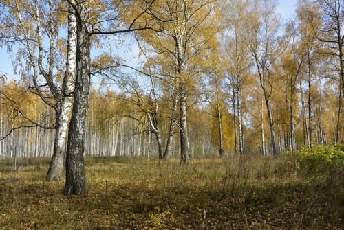 Какие леса преобладают на территории России: типы и характеристика 6