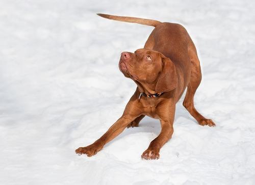 Какие породы собак лучше подходят для детей? 10