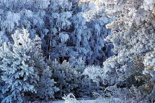 ТОП 10 национальных природных парков России - список, фото, карты и описание 10