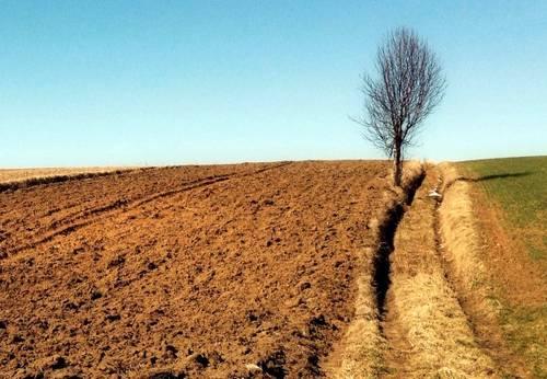 В каком лесу почвы более плодородны почему