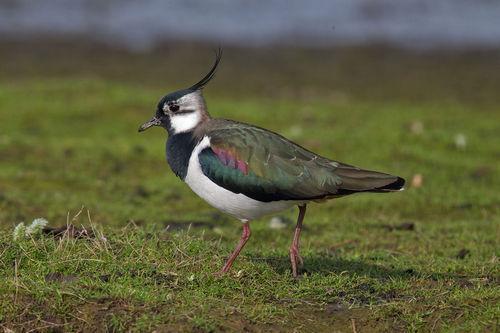 Какие птицы зимой улетают на юг: названия, фото и краткое описание перелетных видов птиц 18
