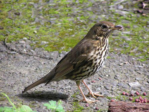 Какие птицы зимой улетают на юг: названия, фото и краткое описание перелетных видов птиц 4