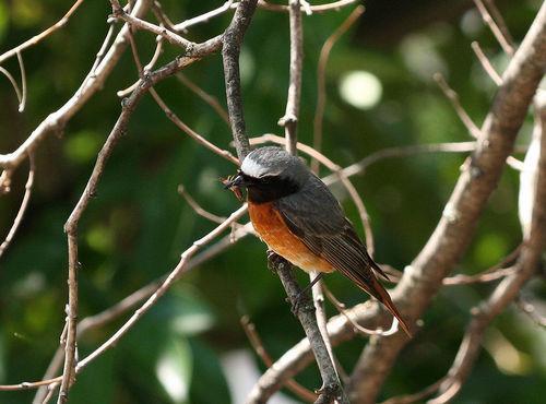 Какие птицы зимой улетают на юг: названия, фото и краткое описание перелетных видов птиц 3