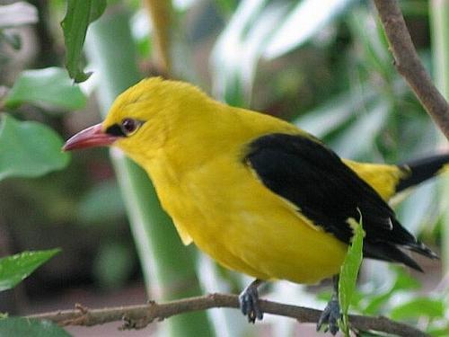Какие птицы зимой улетают на юг: названия, фото и краткое описание перелетных видов птиц 8