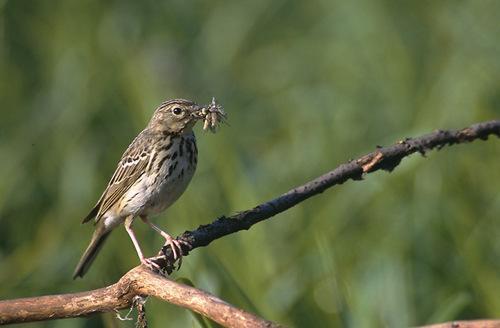 Какие птицы зимой улетают на юг: названия, фото и краткое описание перелетных видов птиц 9