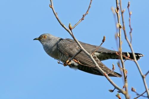 Какие птицы зимой улетают на юг: названия, фото и краткое описание перелетных видов птиц 10