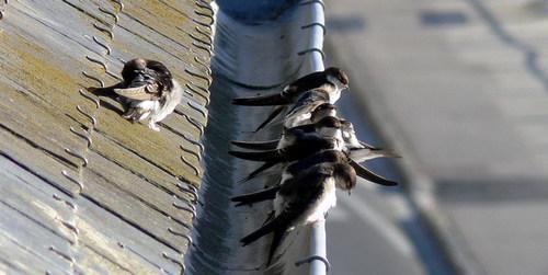 Какие птицы зимой улетают на юг: названия, фото и краткое описание перелетных видов птиц 11