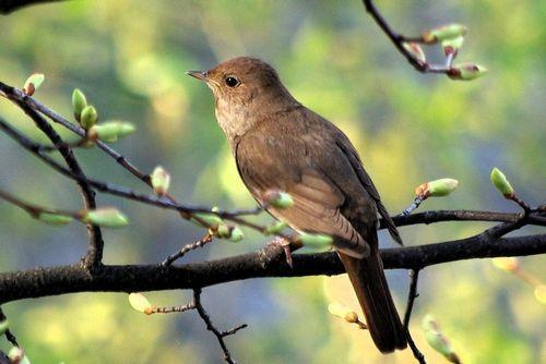 Какие птицы зимой улетают на юг: названия, фото и краткое описание перелетных видов птиц 16