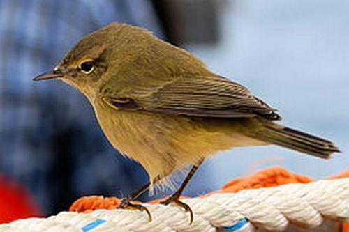 Какие птицы зимой улетают на юг: названия, фото и краткое описание перелетных видов птиц 13