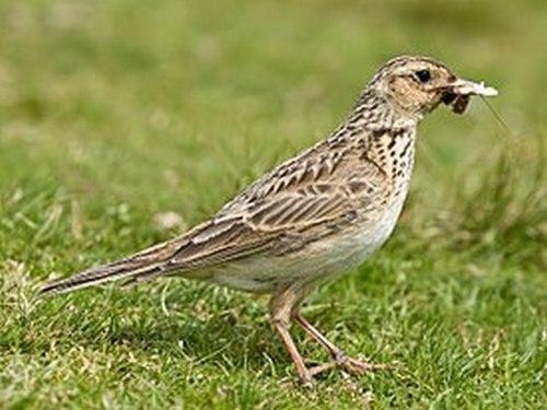 Какие птицы зимой улетают на юг: названия, фото и краткое описание перелетных видов птиц 6