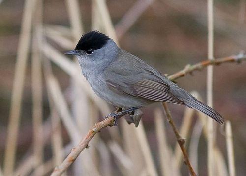 Какие птицы зимой улетают на юг: названия, фото и краткое описание перелетных видов птиц 15