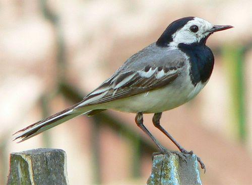 Какие птицы зимой улетают на юг: названия, фото и краткое описание перелетных видов птиц 17
