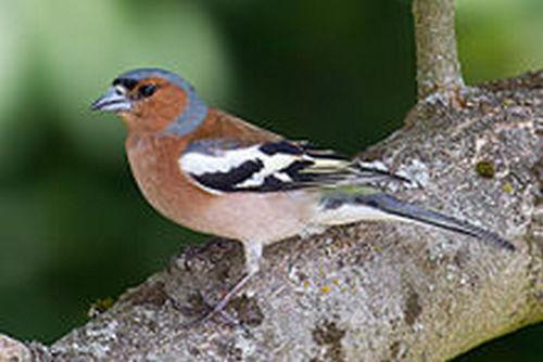 Какие птицы зимой улетают на юг: названия, фото и краткое описание перелетных видов птиц 7