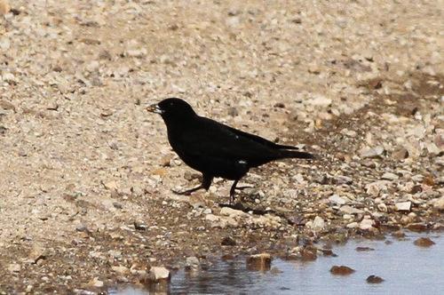 Птицы степи фото и названия