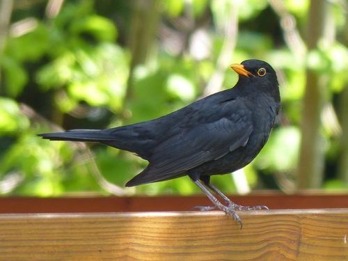 Зимующие (оседлые) и кочующие птицы: список видов, названия, фото и характеристика 8