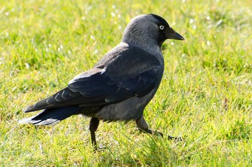 Зимующие (оседлые) и кочующие птицы: список видов, названия, фото и характеристика 6