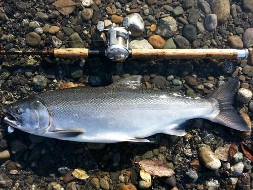 Промысловые виды рыб: названия, фото и характеристика 12