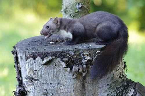 Какие животные обитают в Крыму? 4