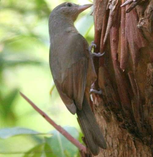 Ядовитые виды птиц: названия, характеристика и фото 6