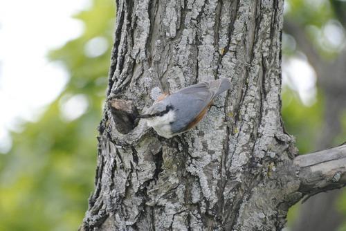 Зимующие (оседлые) и кочующие птицы: список видов, названия, фото и характеристика 10