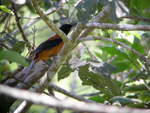 Ядовитые виды птиц: названия, характеристика и фото 4