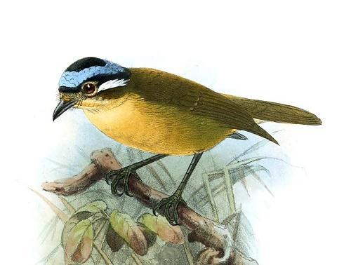 Ядовитые виды птиц: названия, характеристика и фото 5