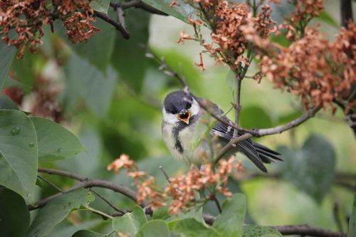 Зимующие (оседлые) и кочующие птицы: список видов, названия, фото и характеристика 15