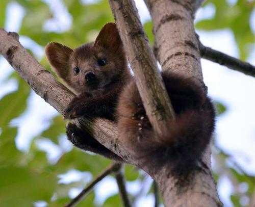 Какие животные обитают в лесах - названия, фото и описание 7