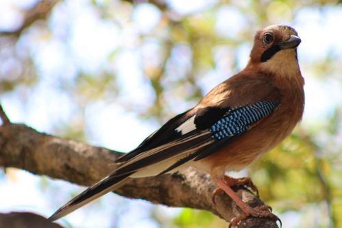 Зимующие (оседлые) и кочующие птицы: список видов, названия, фото и характеристика 19