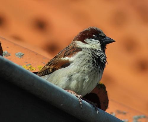 Зимующие (оседлые) и кочующие птицы: список видов, названия, фото и характеристика 3