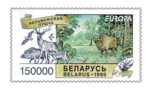 Животный мир Республики Беларусь: особенности, примеры и фото животных 2