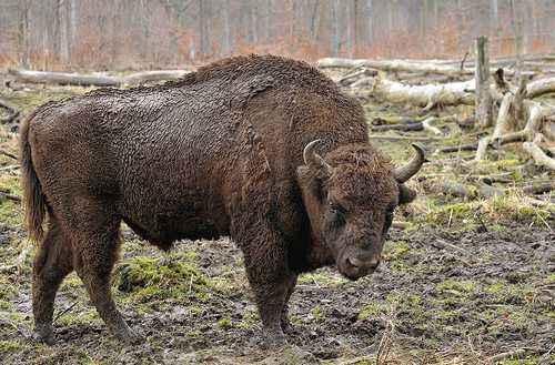 Животный мир Республики Беларусь: особенности, примеры и фото животных 3