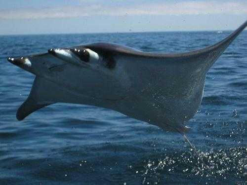 Животные умеющие летать: названия, характеристика и фото 3