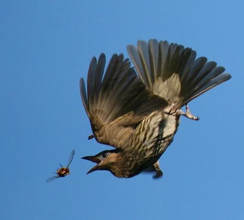 Чем питаются птицы? 3