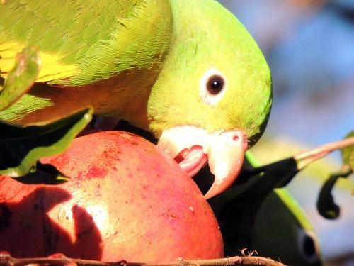 Чем питаются птицы? 7