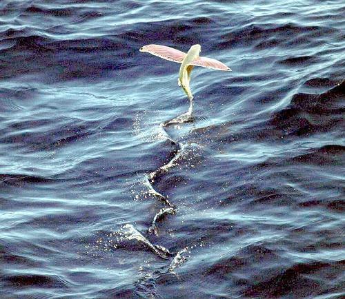 Животные умеющие летать: названия, характеристика и фото 2