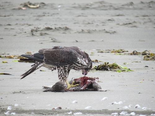 Чем питаются птицы? 4