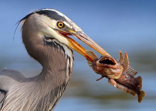 Чем питаются птицы? 2