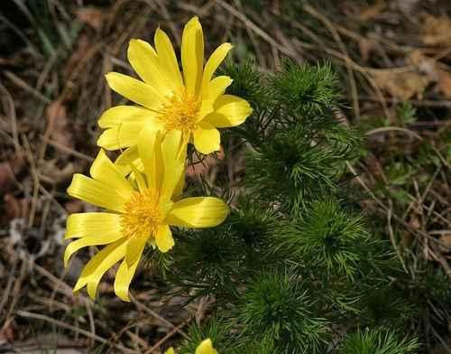 Какие растения растут в степной зоне - названия, фото и характеристика 4