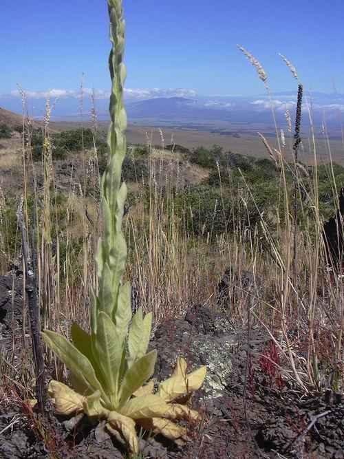 Какие растения растут в степной зоне - названия, фото и характеристика 3