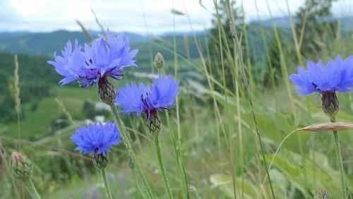 Какие растения растут в степной зоне - названия, фото и характеристика 8