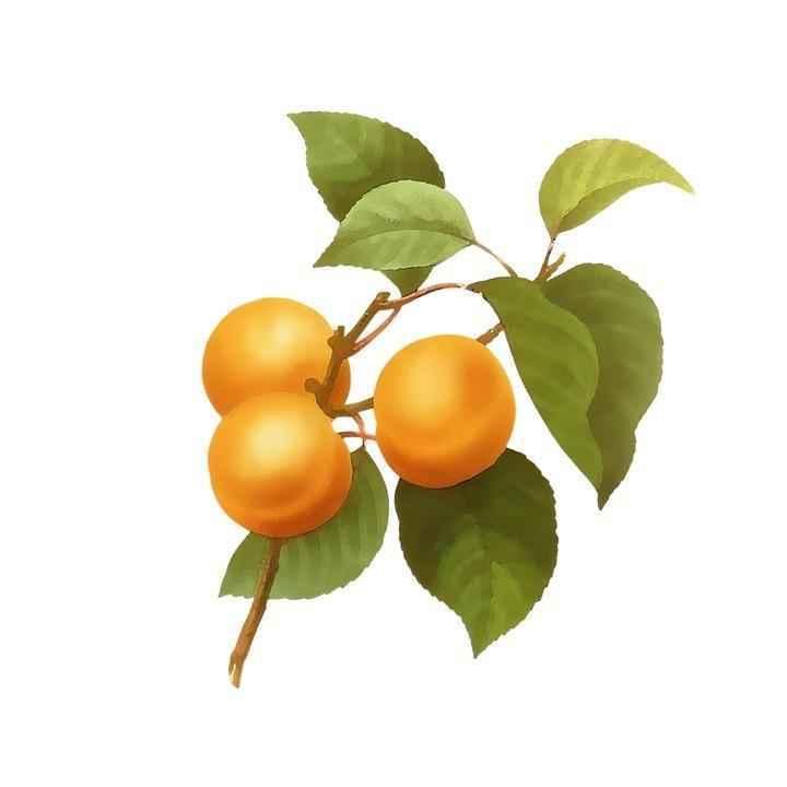 Детские картинки фруктов с названиями 2