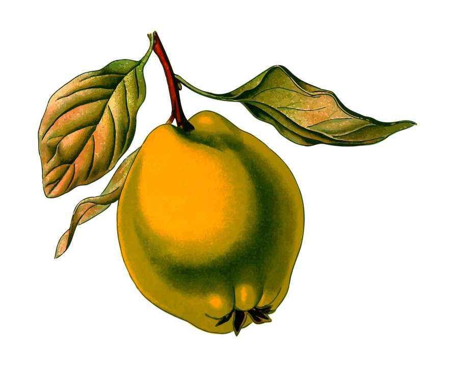 Детские картинки фруктов с названиями 4