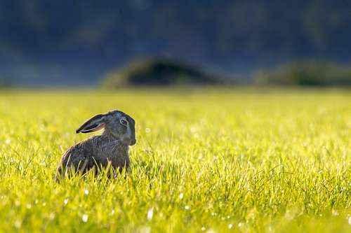 Экосистема или природное сообщество луга: описание, растения, животные, роль для человека и охрана
