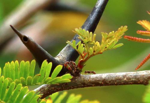 Симбиоз живых организмов в природе: определение, типы и примеры 2