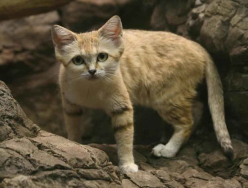 Фауна Египта - Какие животные обитают в Египте? 6